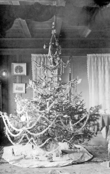 """""""The Christmas tree at the M.R. Smith home, 104 Dallas Road, Victoria."""" [ca. 1906]. Image A-02398/RBCM&A"""
